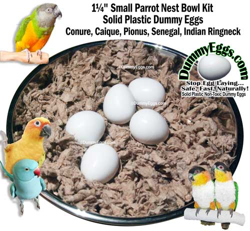 Solid Plastic SMALL PARROT DUMMY EGGS in Stainless Steel Nest Bowl fits Conure Eggs, Caique Eggs, Rosella Eggs, Pionus Eggs, Senegal Eggs, Jardine Eggs, Indian Ringneck Eggs. Stop Egg Laying!