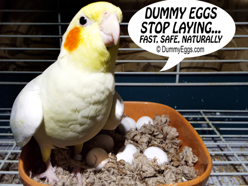 DummyEggs.com Plastic Bird Eggs, Fake Bird Eggs, Dummy Eggs. Stop Egg Laying