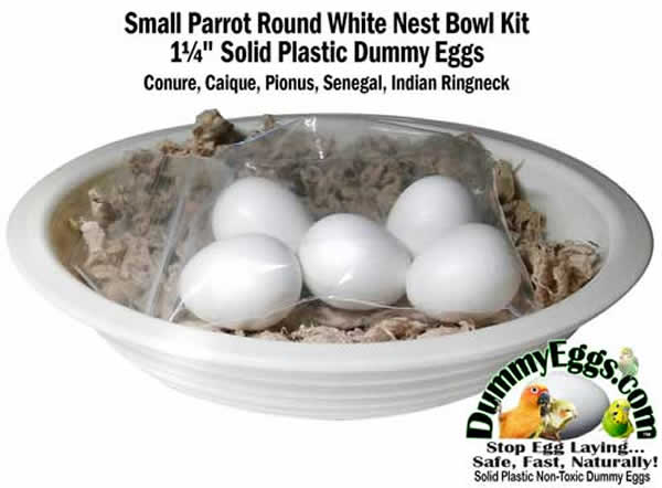 Solid Plastic SMALL PARROT DUMMY EGGS in White Melamine Nest Bowl fits Conure Eggs, Caique Eggs, Rosella Eggs, Pionus Eggs, Senegal Eggs, Jardine Eggs, Indian Ringneck Eggs. Stop Egg Laying!